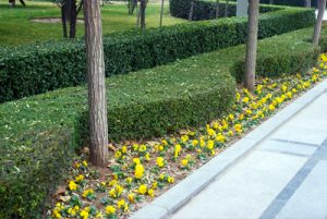 Landscaping in Ankeny IA