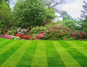 Lawn Care in Saylorville IA