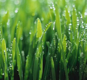 Lawn Care in West Des Moines IA