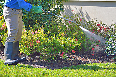 Lawn Treatments in Clive IA